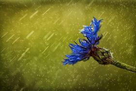 Flor lluvia - colectivo fotografico desencuadre